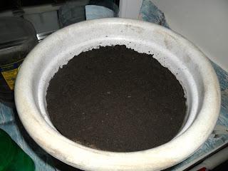 25 января, вазон для выращивания перцев в квартире