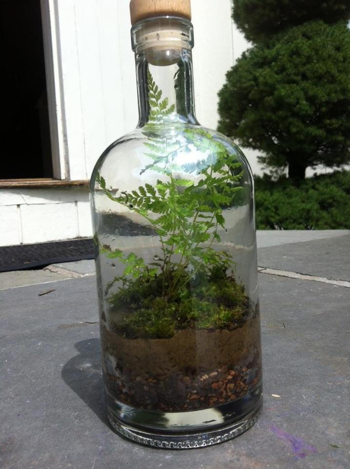 The Fern And Mossery Bottle Terrarium With Fern