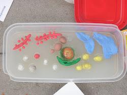 células com gelatina e massinha