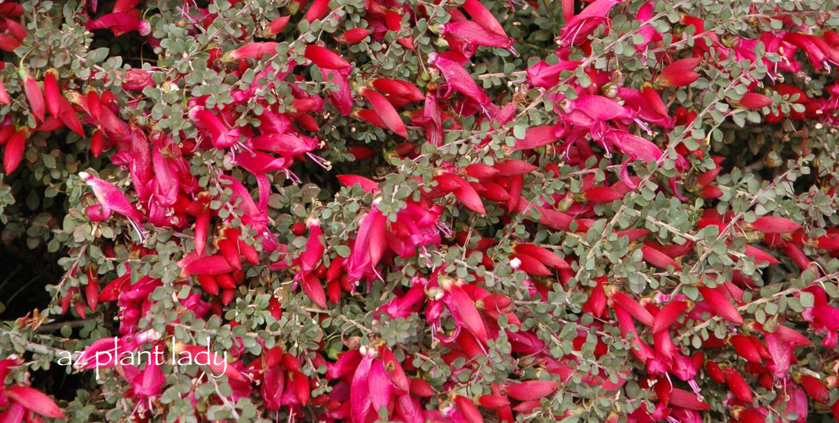 Plant Palette For New Landscape Area Trees And Shrubs
