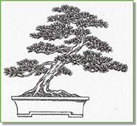 Redlands Bonsai Society