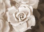 ♥ Le mie rose ♥