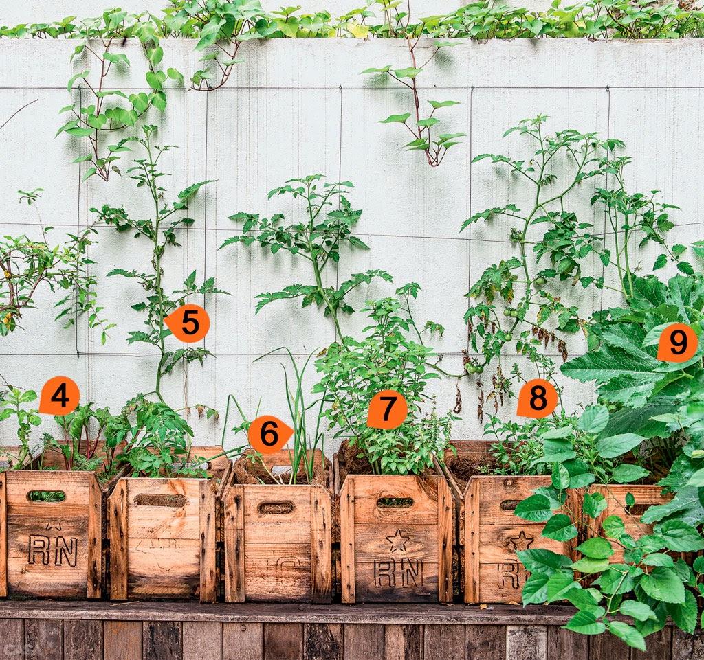 HORTAMIX: Quintal tem ?rvores frut?feras, horta em caixotes