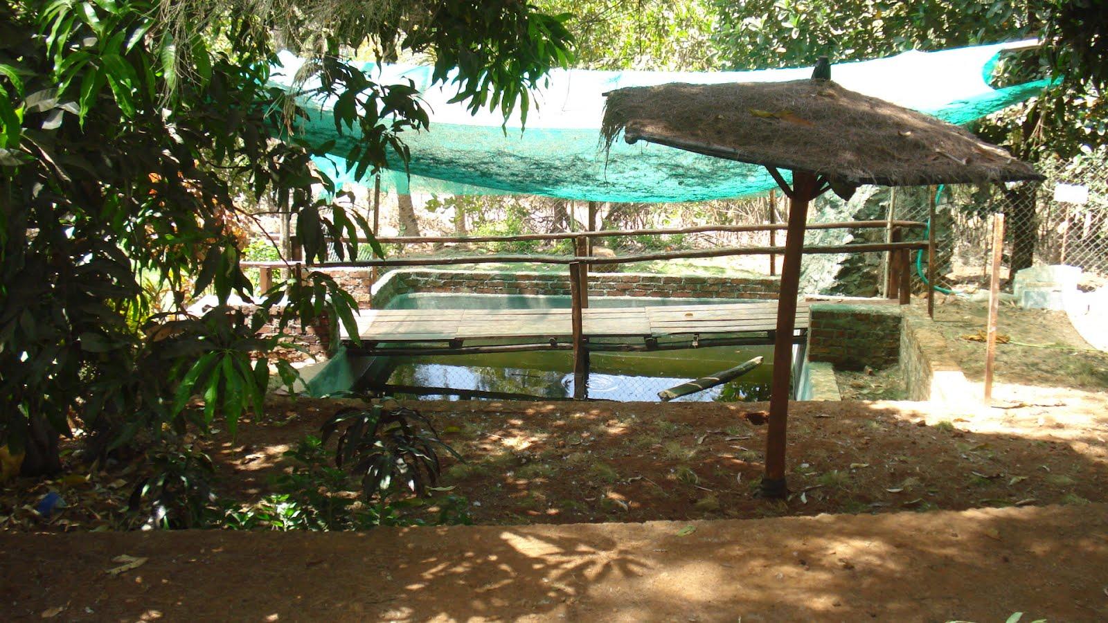 Places Near Mumbai: Rohini farm house at Vasai Virar for Farmhouse In Vasai For Picnic  110zmd