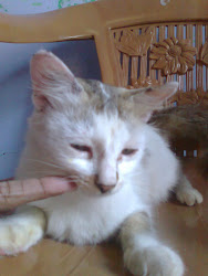 my pet cat munni