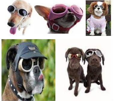doggles gafas para perros