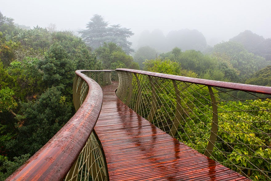 Kirstenbosch Centenary Tree Canopy walkway-3