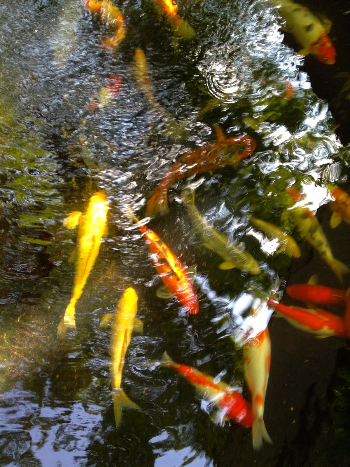 Anoxic filtration system testing of tds ec of the for Looking after koi