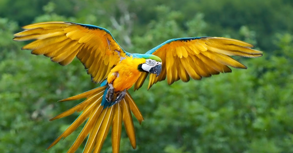 Hd wallpapers bird of paradise - Hd images of birds of paradise ...