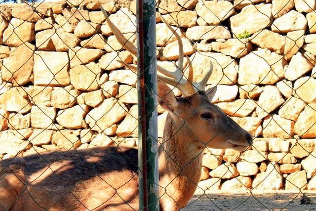 Baluarte, Vigan, Zoo