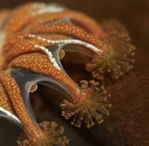 Costa Rican Jellyfish