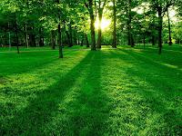 1600x1200, Nature, green, forest wallpaper