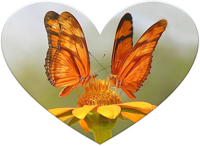36_corazon_mariposa