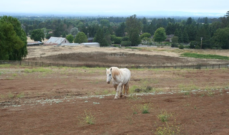 scenic shot of a large cream colored horse, kind of like a clydesdale but I don't know my horse breeds, in a large fenced enclosure with beautiful view of trees and town in distance