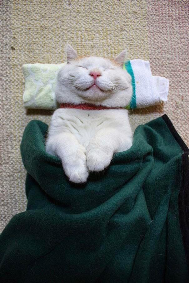 shironeko el gato mas feliz y dormilon