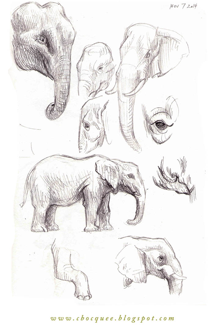 sketchbook studies of elephants