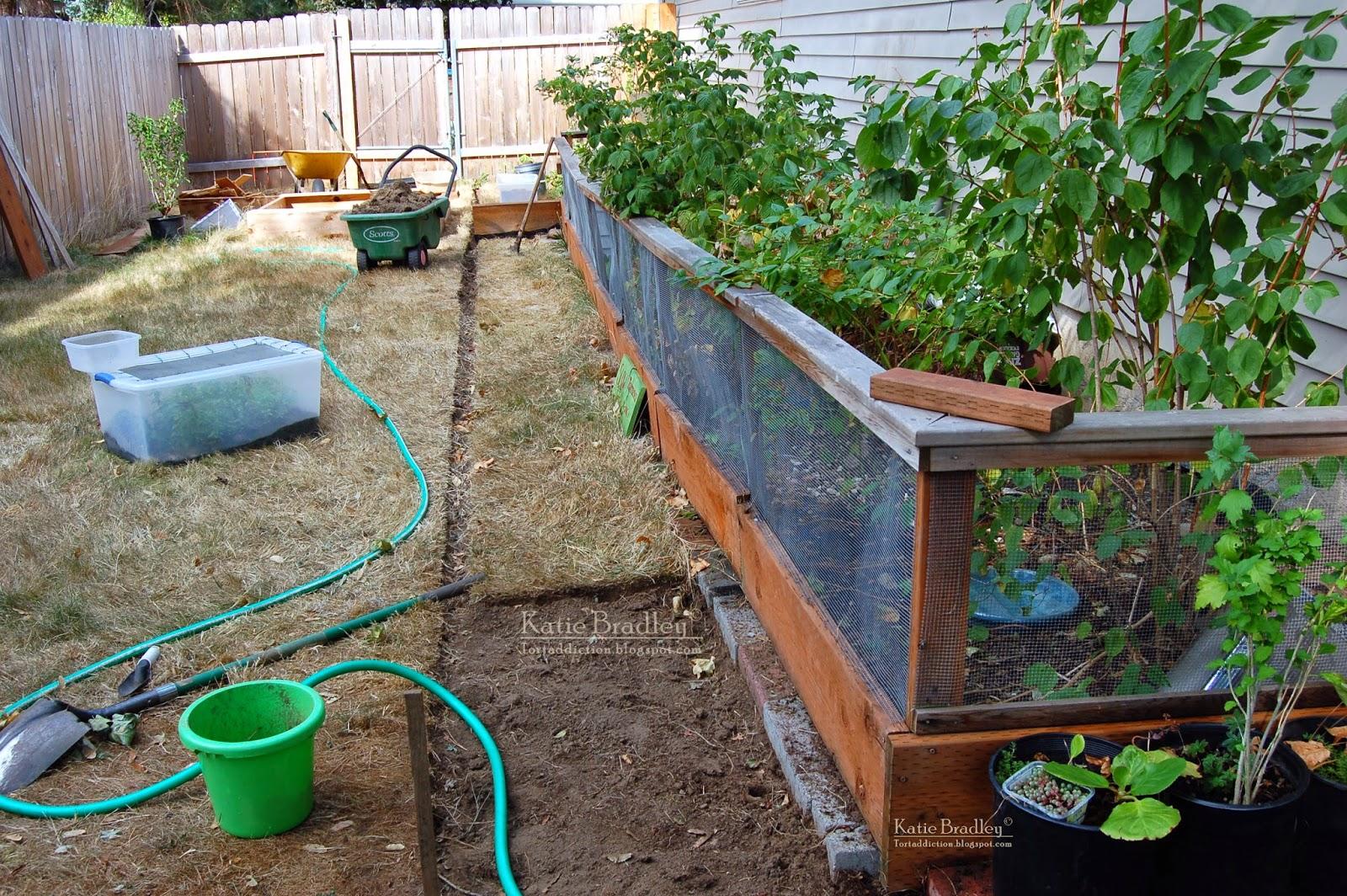 tortaddiction outdoor tortoise enclosure version 2 0