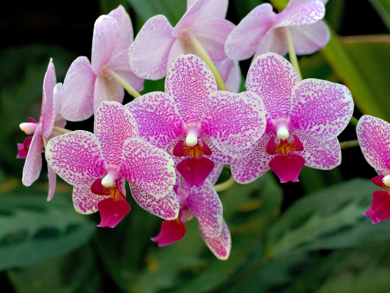 5 Orchid top 10 flowers of love