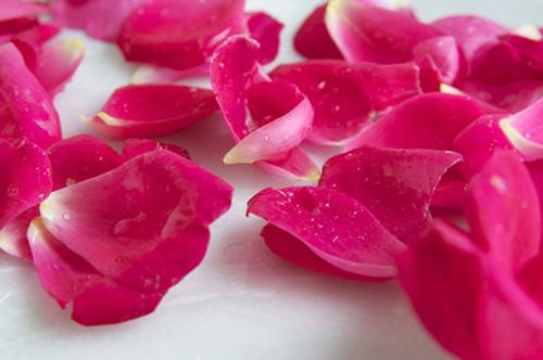 Hoa hồng là thần dược chăm sóc sắc đẹp cả khô da