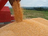 Safra de grãos do país deve aumentar 5,1% em 2013