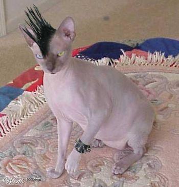 funny crazy cats new photos all funny