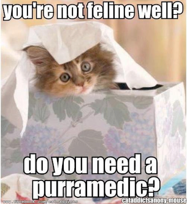 You're not feline well? Do you need a purramedic?