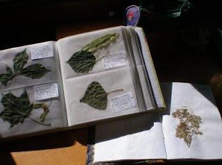 como fazer um herbário