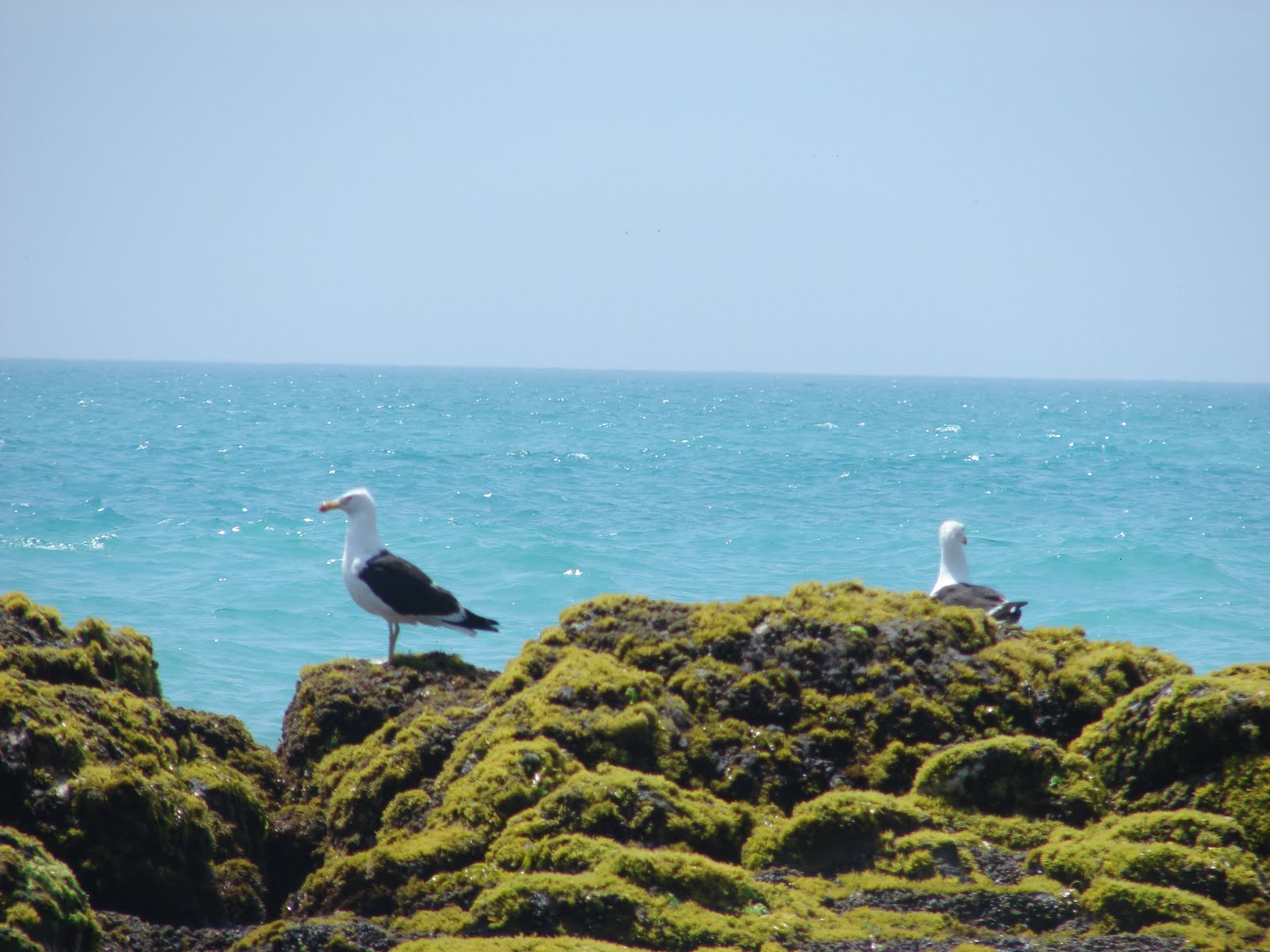 11-febrero-12-13-14-15...2011  playas en Huacho.