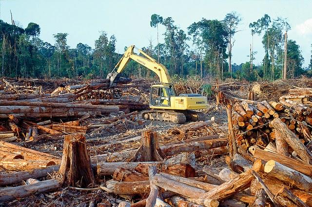 DESASTRE ECOLOGICO EN SELVA AMAZONICA