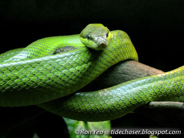 The Tide Chaser Snakes Phylum Chordata Suborder Serpentes Of