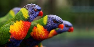 Beautiful birds pictures, beautiful birds wallpapers