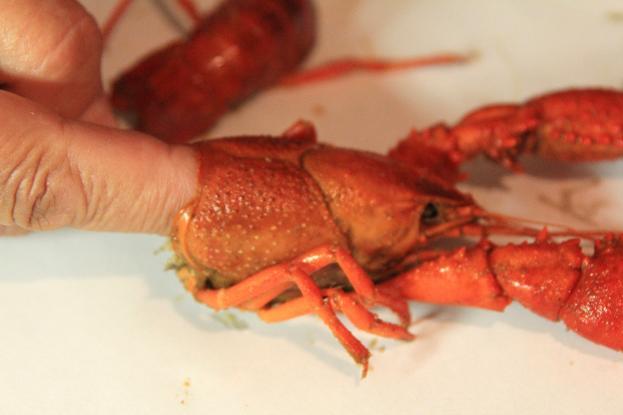 how to eat crawfish head