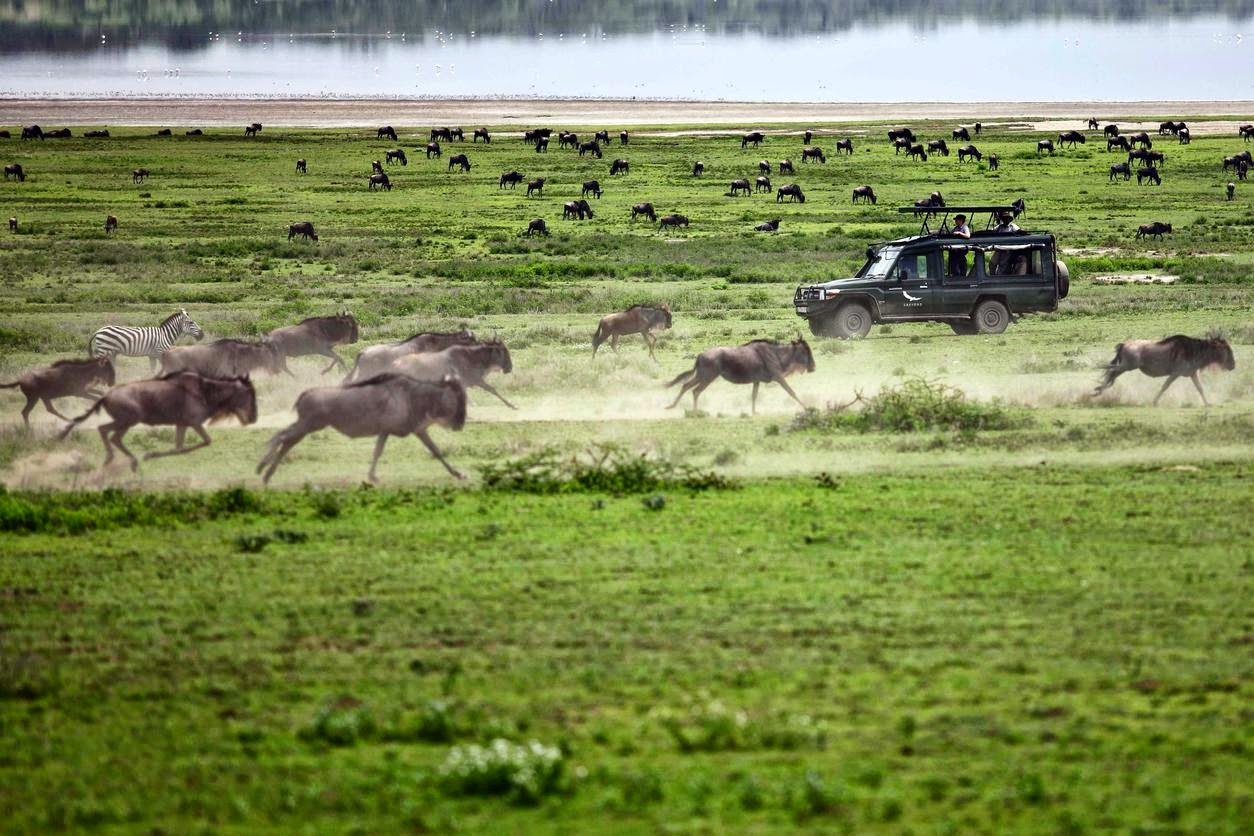 A safari revival in troubled times. Game crossing the Serengeti. Credit And Beyond
