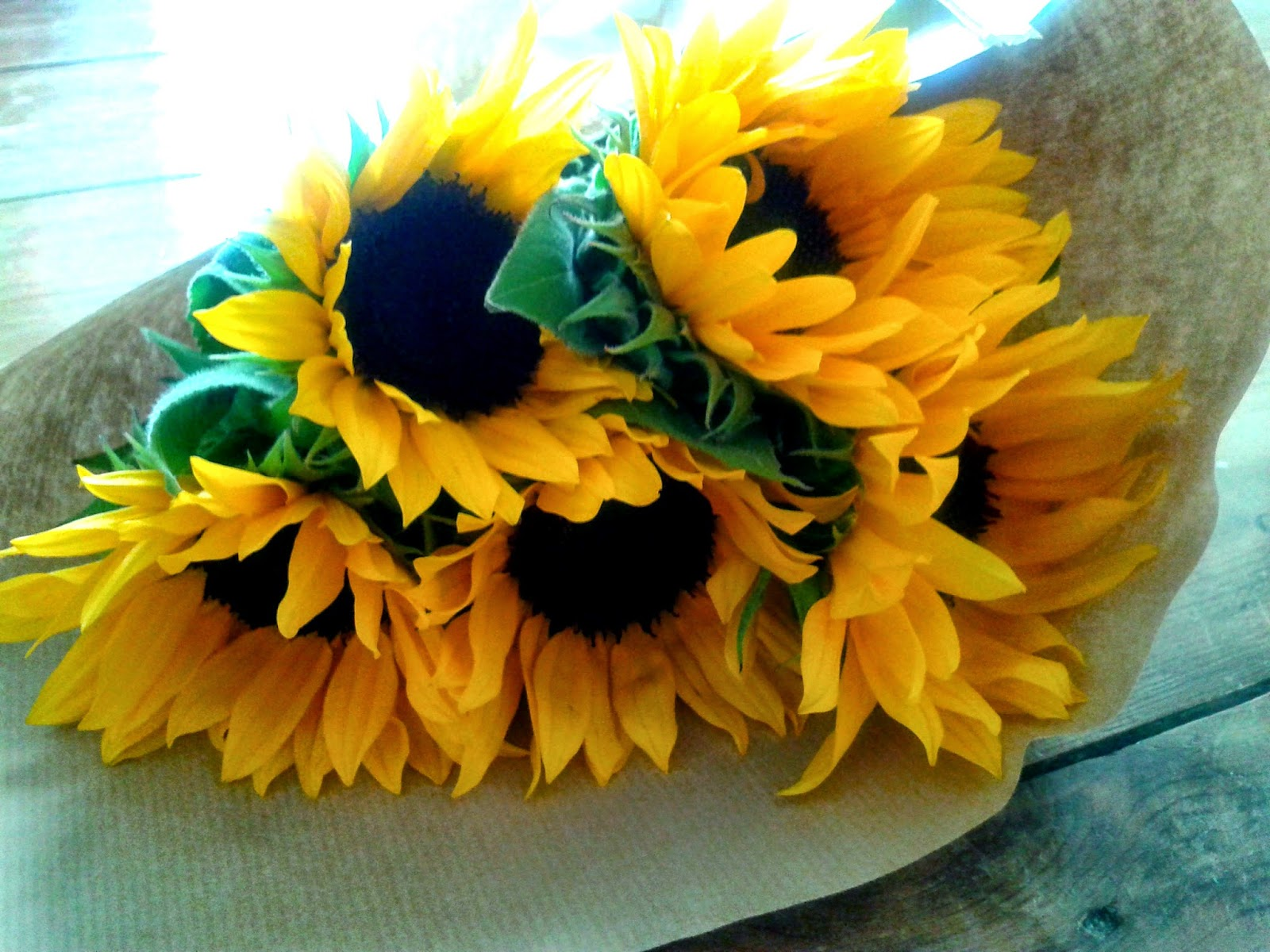 Project 365 day 120 - Sunflowers // 76sunflowers
