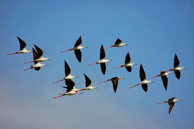 burung-terbang-di-udara-mselim3