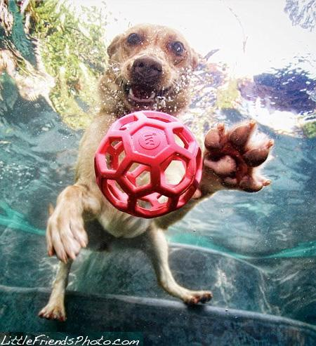 Striking Underwater Dogs