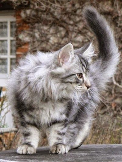 Top 5 Most Prolific Cat Breeds