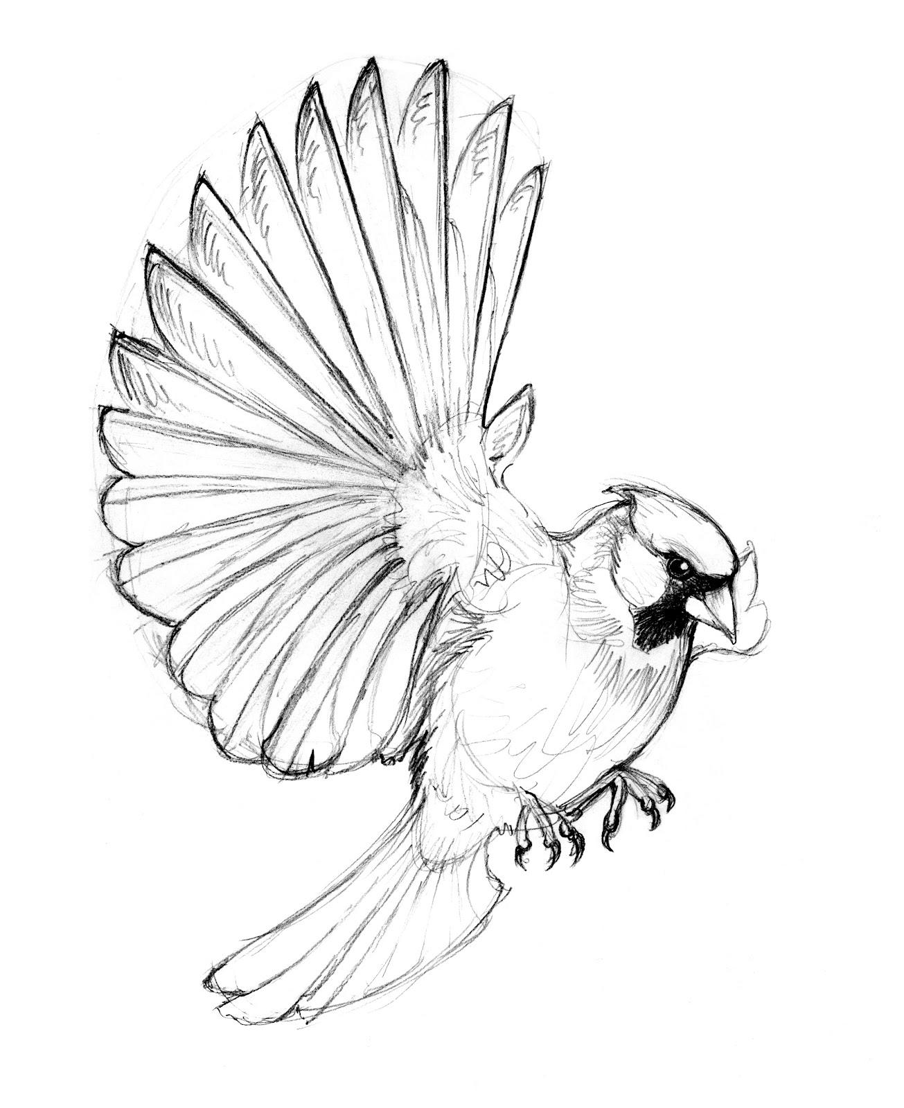 Bird Line Drawing Tattoo : Wild life cardinal wallpaper birds