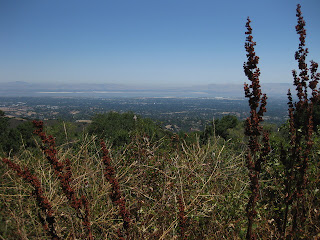 View of the valley and San Francisco Bay from Page Mill Road, Palo Alto, CA