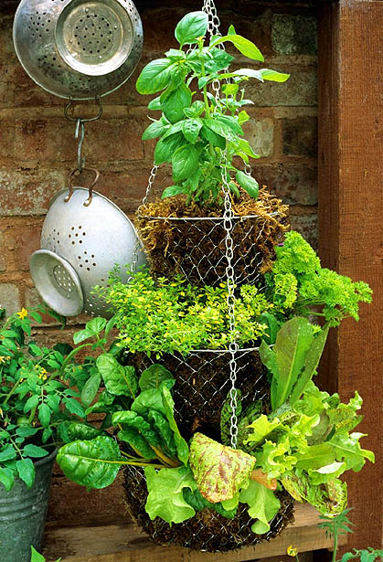 Create a hanging herb garden with tiered kitchen baskets image by