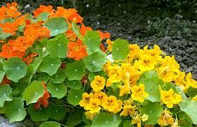 jardin et fleurs: