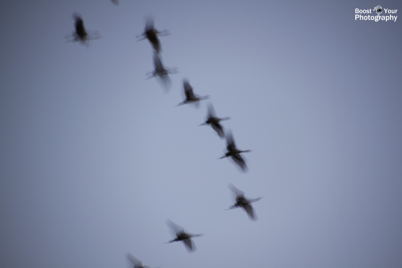 Cranes in Flight - Capturing Motion in Photography | Boost Your Photography