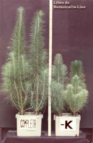 El potasio en plantas fertilizantes for Potasio para plantas