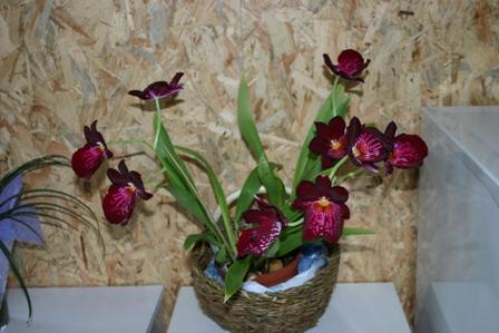 Una pianta per ogni stanza ilnostrospazio - Piante in bagno ...
