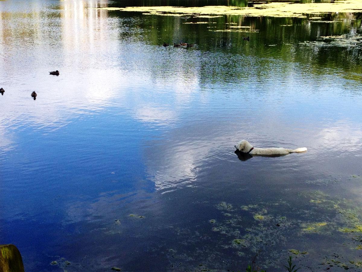 Hampstead Heath Bathing Ponds Imogen Scribbles
