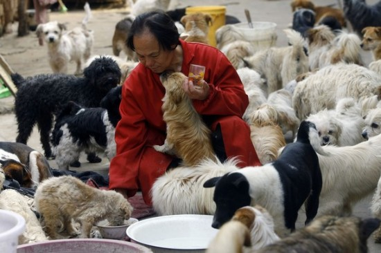 Li Zongwen : Man Looks After 140 Stray Dogs