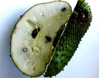 Soursop Fruit Cancer
