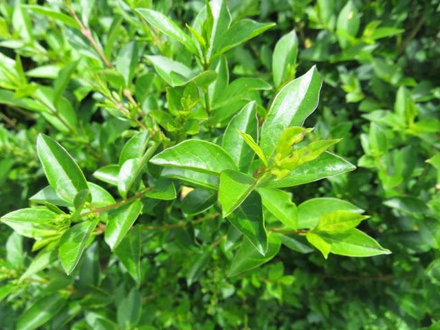 Fotografia macro de pequeno arbusto de jardim