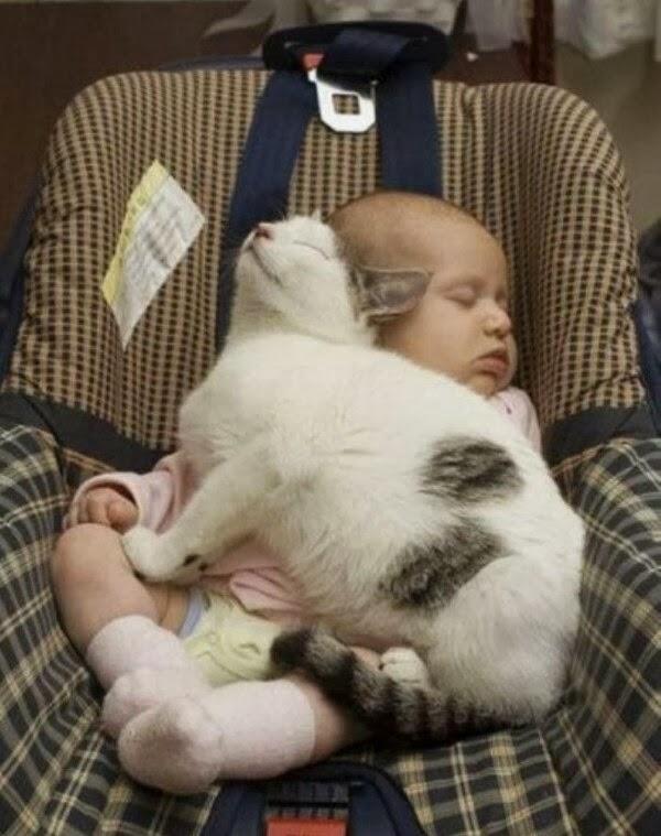 Funny cats - part 74 (35 pics + 10 gifs), cat pics, funny cat picture, cat photo