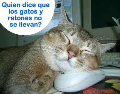 lol cat gato